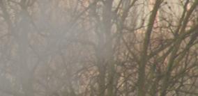 mist-over-tree